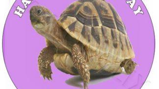 Tortoise round Cake Topper