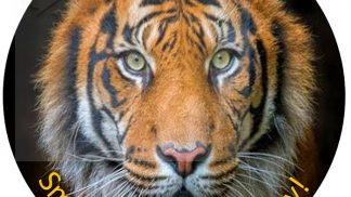 Animal Tiger Cake Topper
